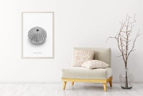 Sea Urchin Prints