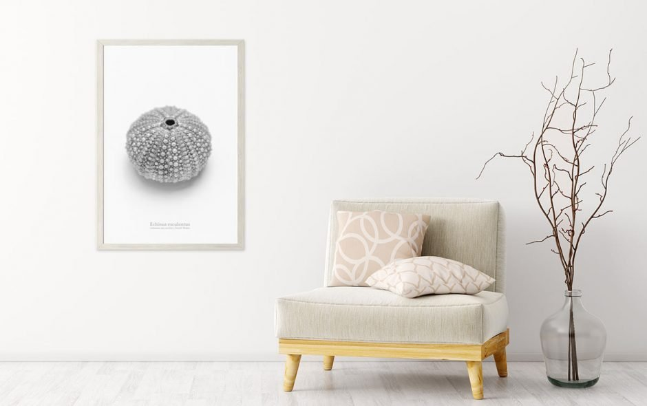 printed wall art Sea Urchin
